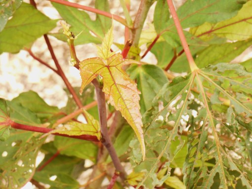 August 9, 2014 hummingbird moth 038