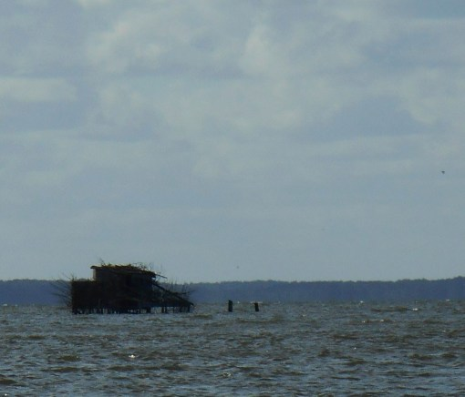 A duck blind, taken over by a family of Osprey Eagles, on the James River.  The whole structure has been converted into an eagles nest.