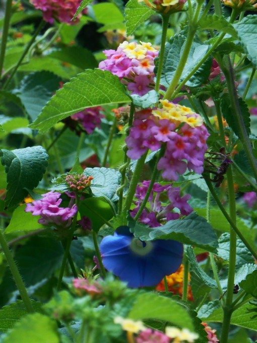 August 31-Sept. 1 garden 011