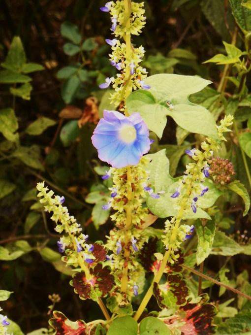 August 31-Sept. 1 garden 014