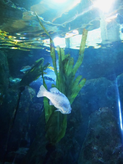 An exhibit at the Newport Aquarium shows how fish interact with the natural sea weeds off the coast.