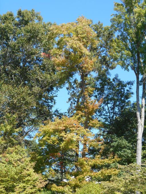 September 27, 2014 garden 002