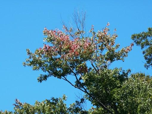 September 27, 2014 garden 003