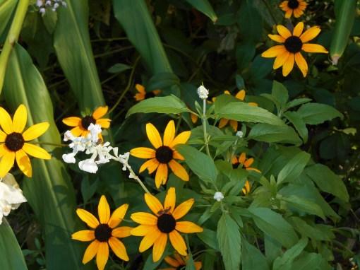 September 27, 2014 garden 005