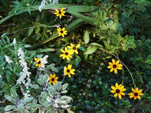 September 27, 2014 garden 015
