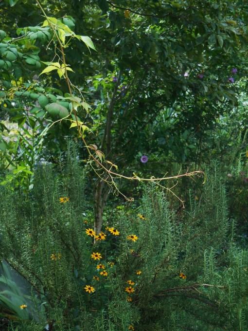 September 3, 2014 garden 015