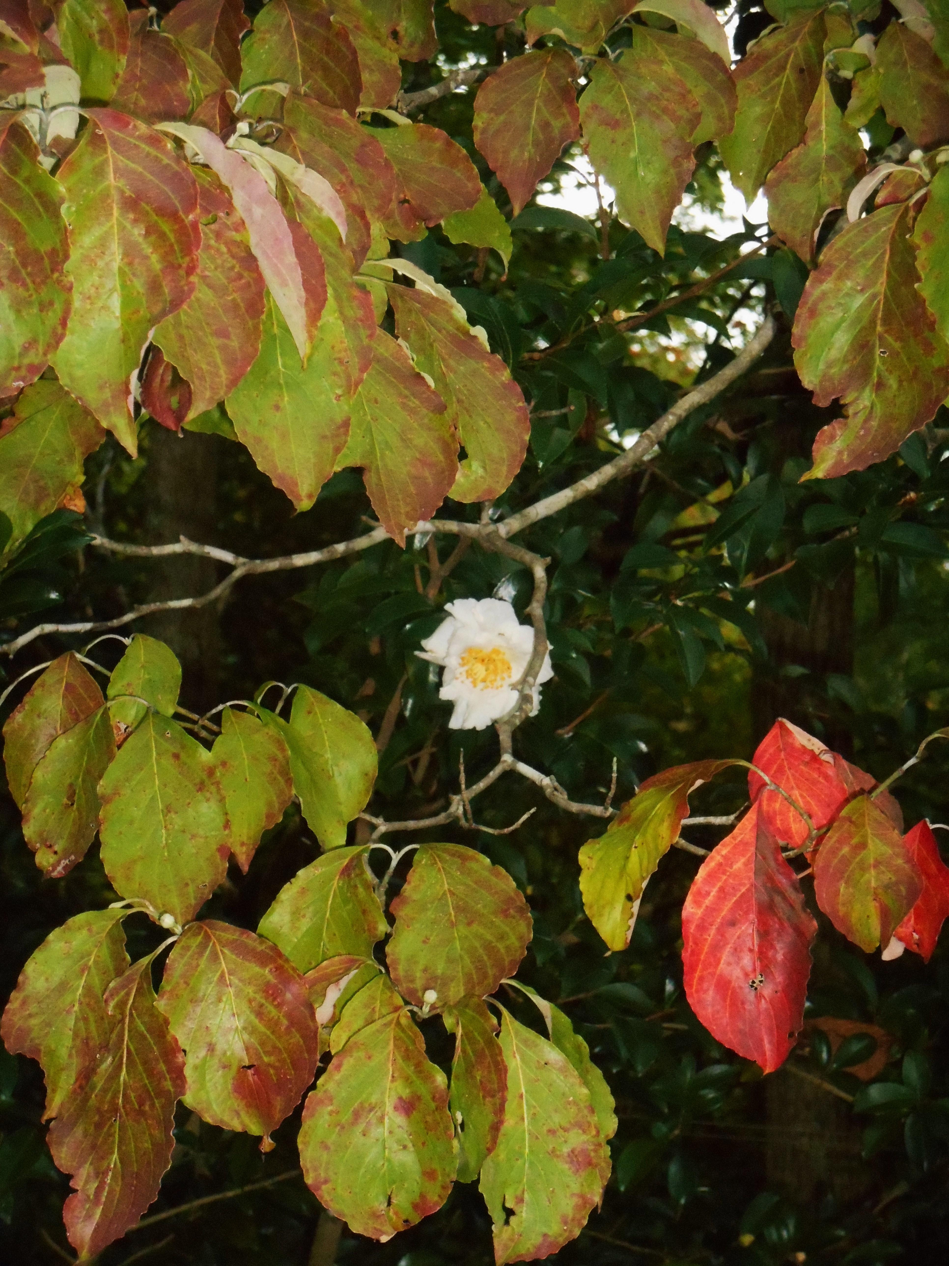 Autumn Flowers Forest Garden