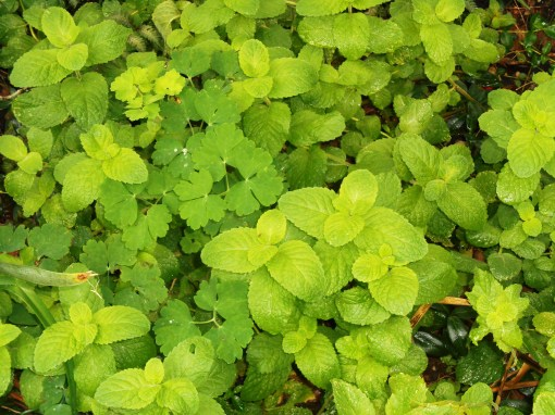 October 15, garden in rain 007