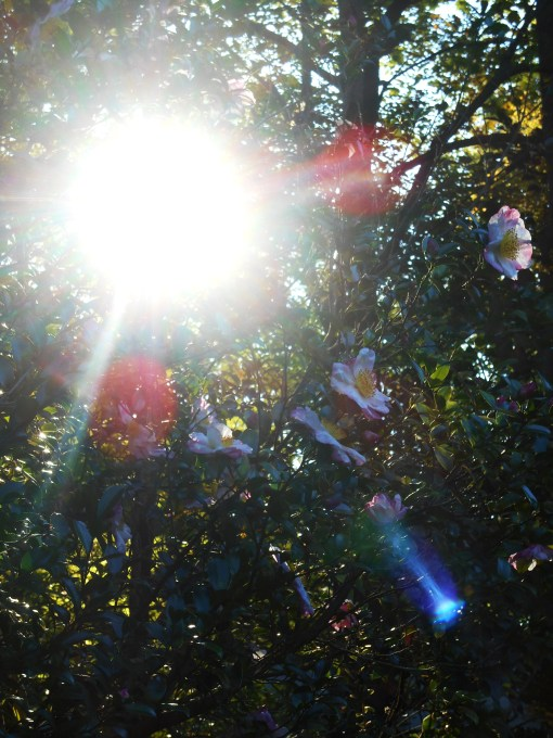 October 17, 2014 light 007