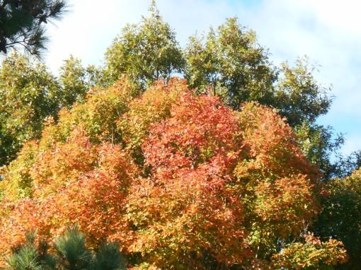 October 19, 2014 fall color 029