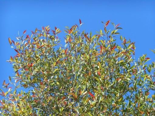 October 19, 2014 fall color 033