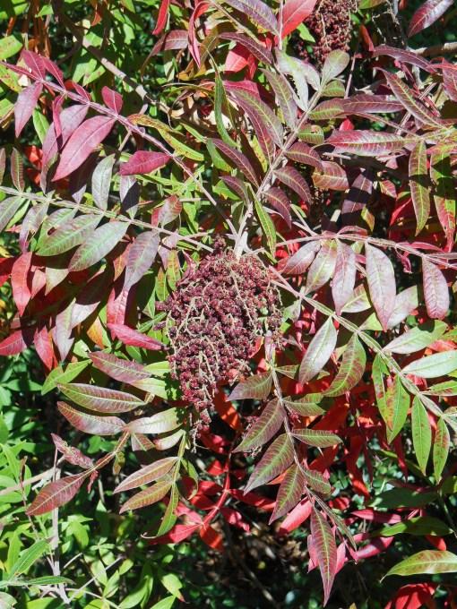 October 19, 2014 fall color 038