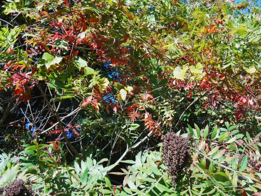October 19, 2014 fall color 039