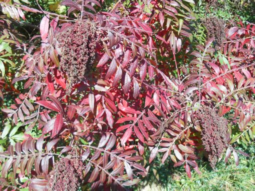 October 19, 2014 fall color 040
