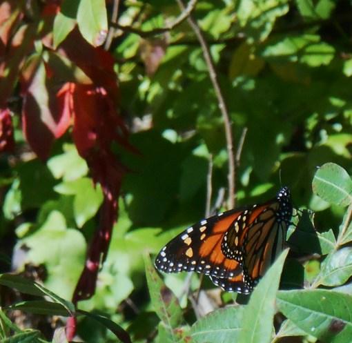 October 19, 2014 fall color 044