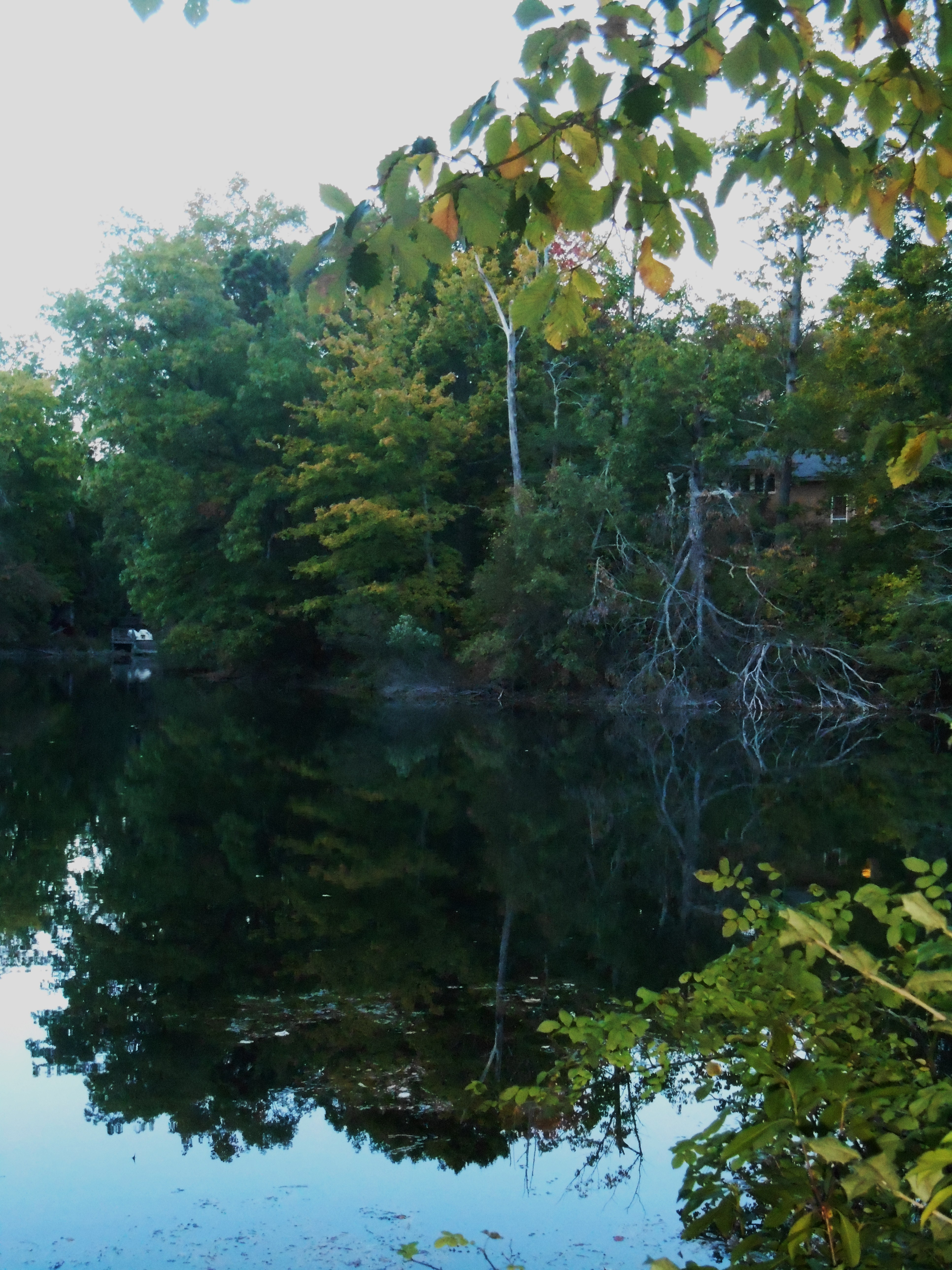 Looking across the pond, the homes are still mostly hidden by trees.