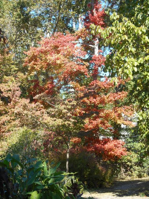 October 25, 2014 fall color 006