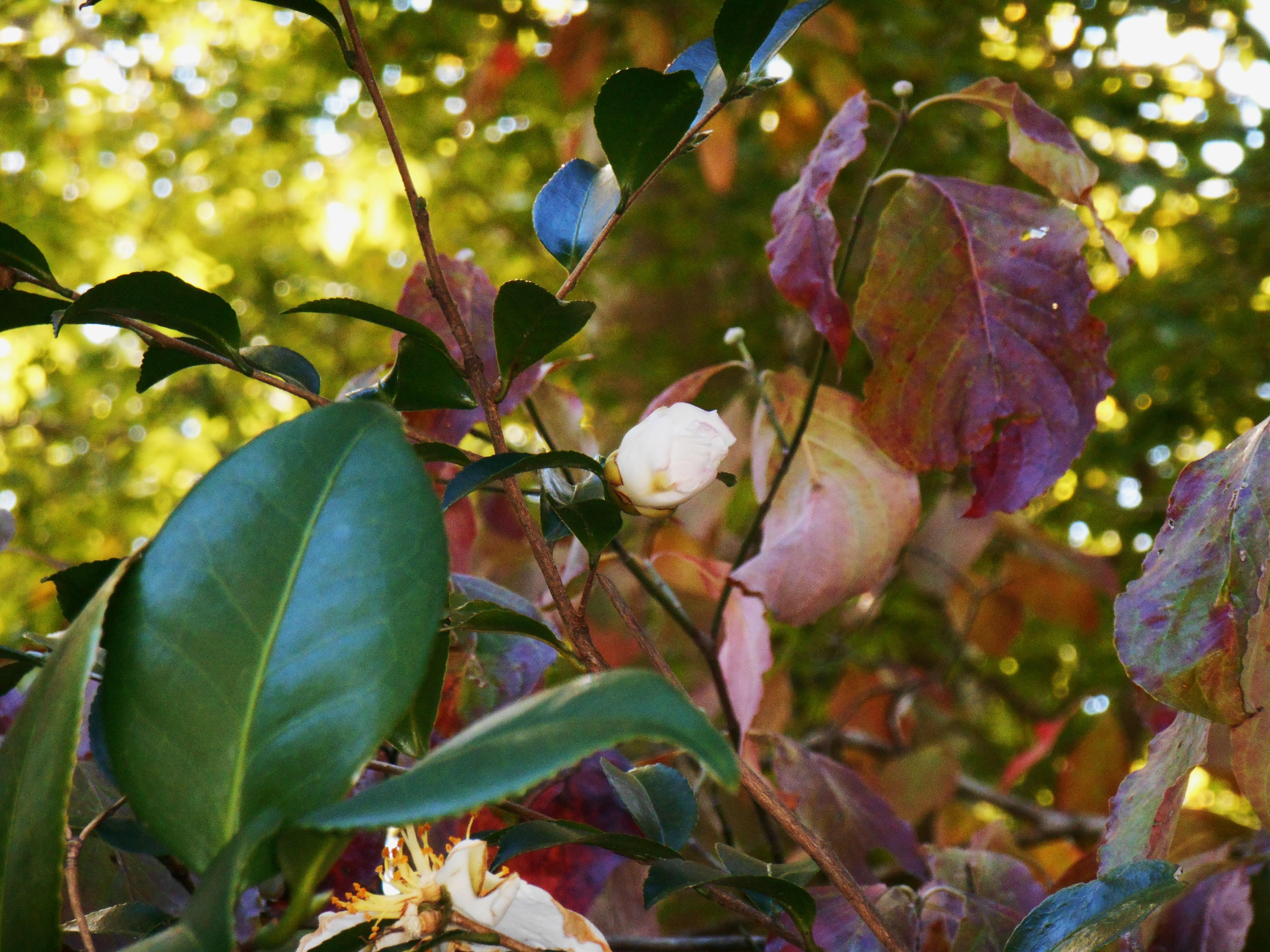 October 25, 2014 fall color 013
