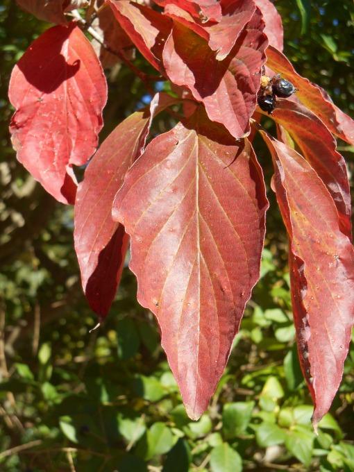 October 28, 2014 fall color 001