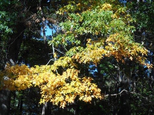 October 28, 2014 fall color 031