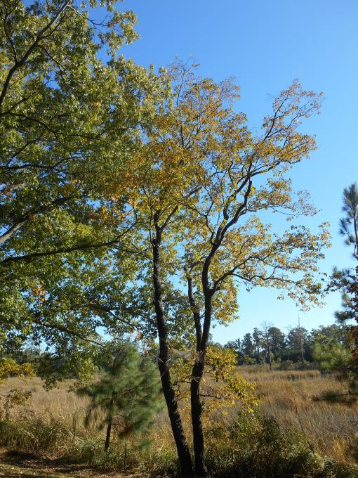 October 28, 2014 fall color 034
