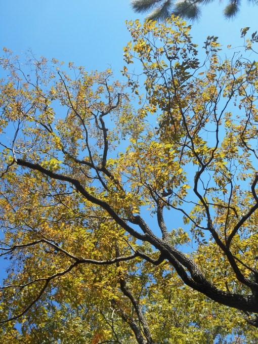 October 28, 2014 fall color 038