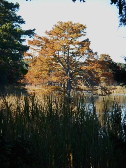 October 28, 2014 fall color 056