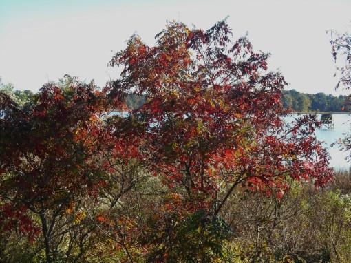 October 28, 2014 fall color 060