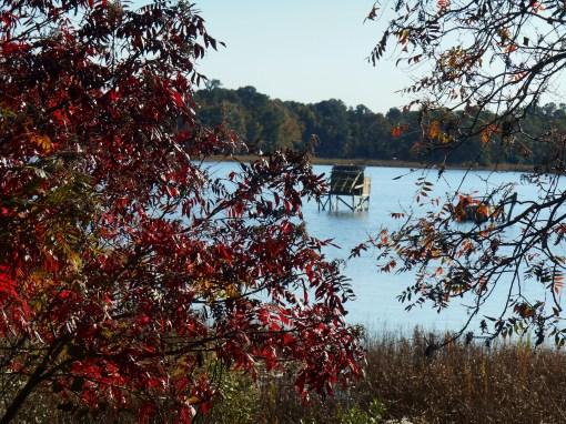 October 28, 2014 fall color 062