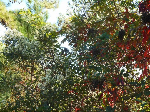 October 28, 2014 fall color 067