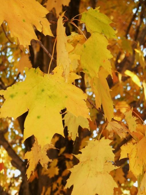 October 28, 2014 fall color 089