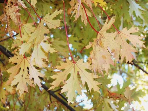 October 28, 2014 fall color 091