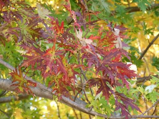 October 28, 2014 fall color 092