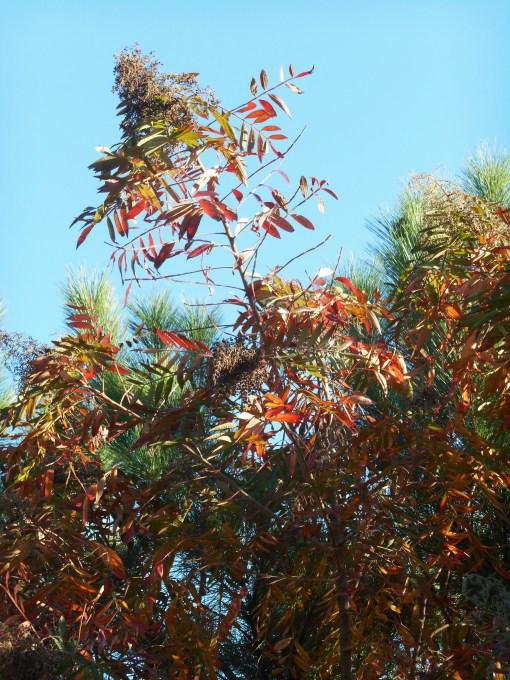 October 28, 2014 fall color 095