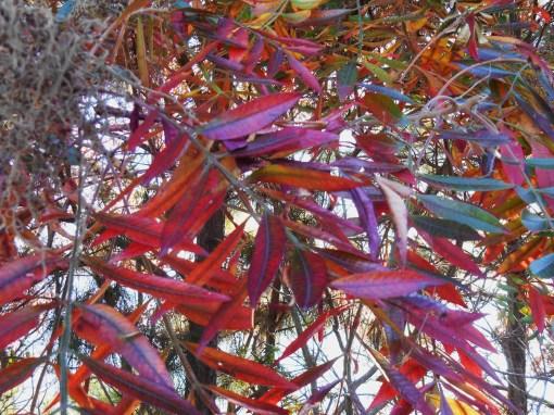 October 28, 2014 fall color 098