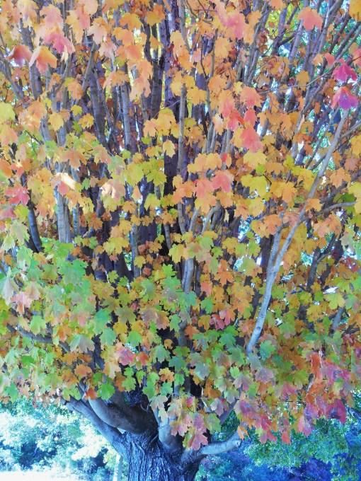 October 28, 2014 fall color 102