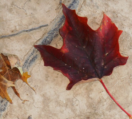 October 28, 2014 fall color 103