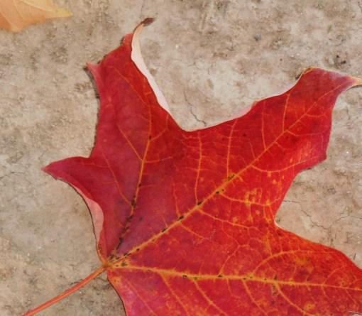 October 28, 2014 fall color 104