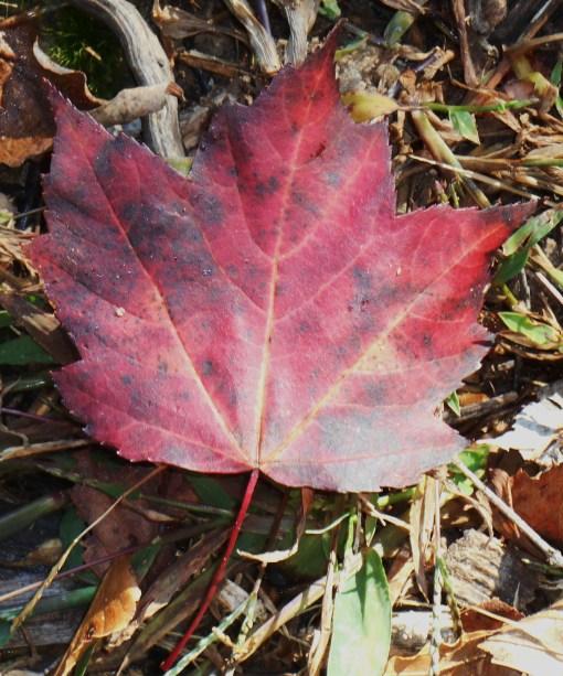 October 28, 2014 garden 005
