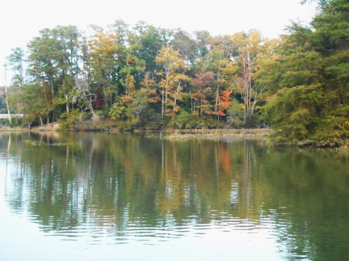 October 29, 2014 fall color 017