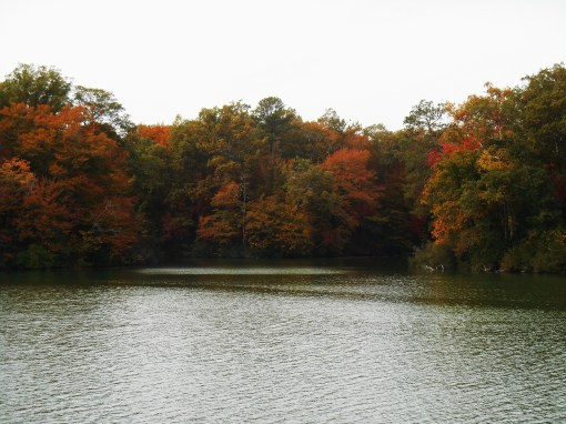 Jones Mill Pond