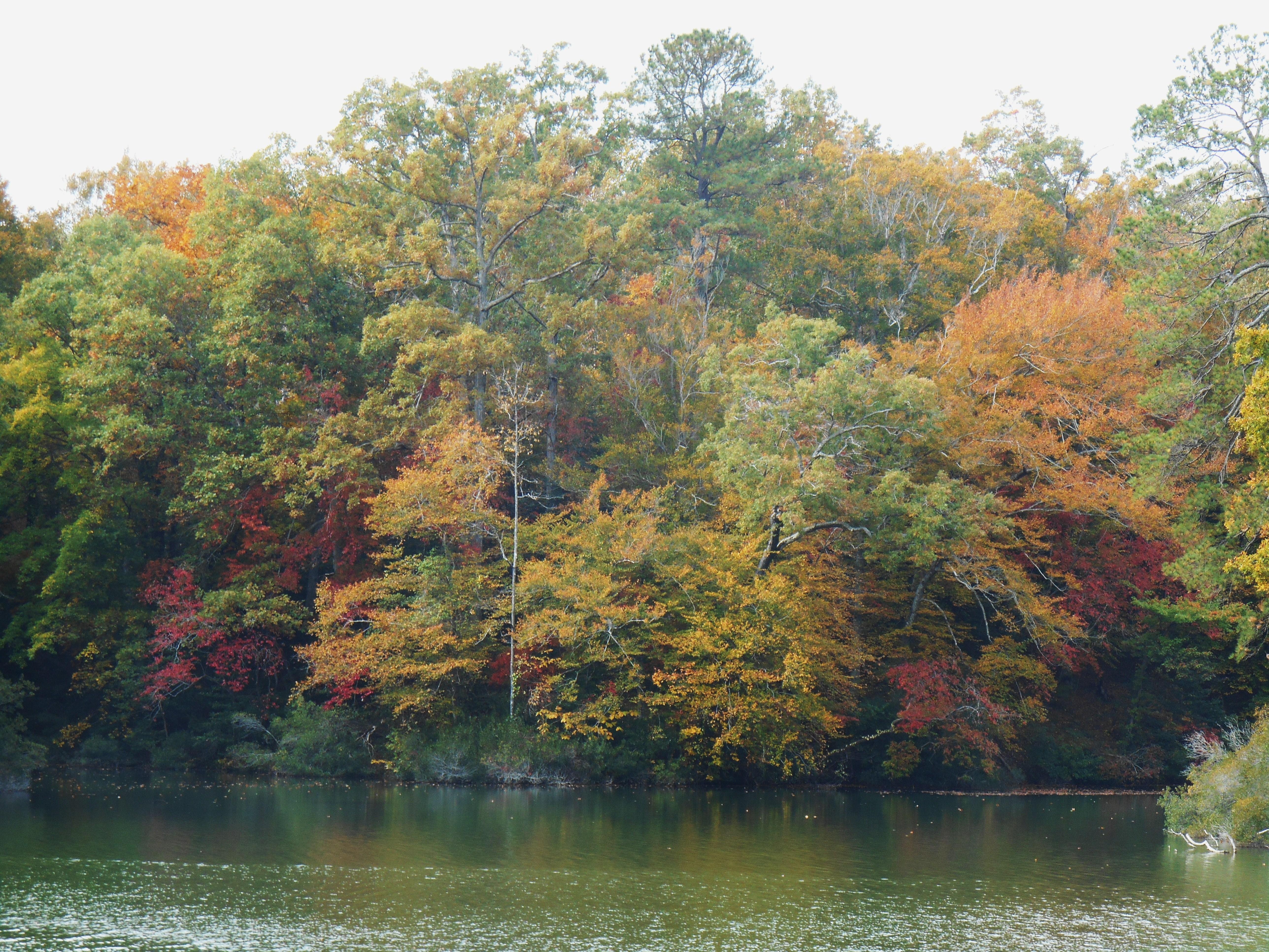 October 29, 2014 fall color 031