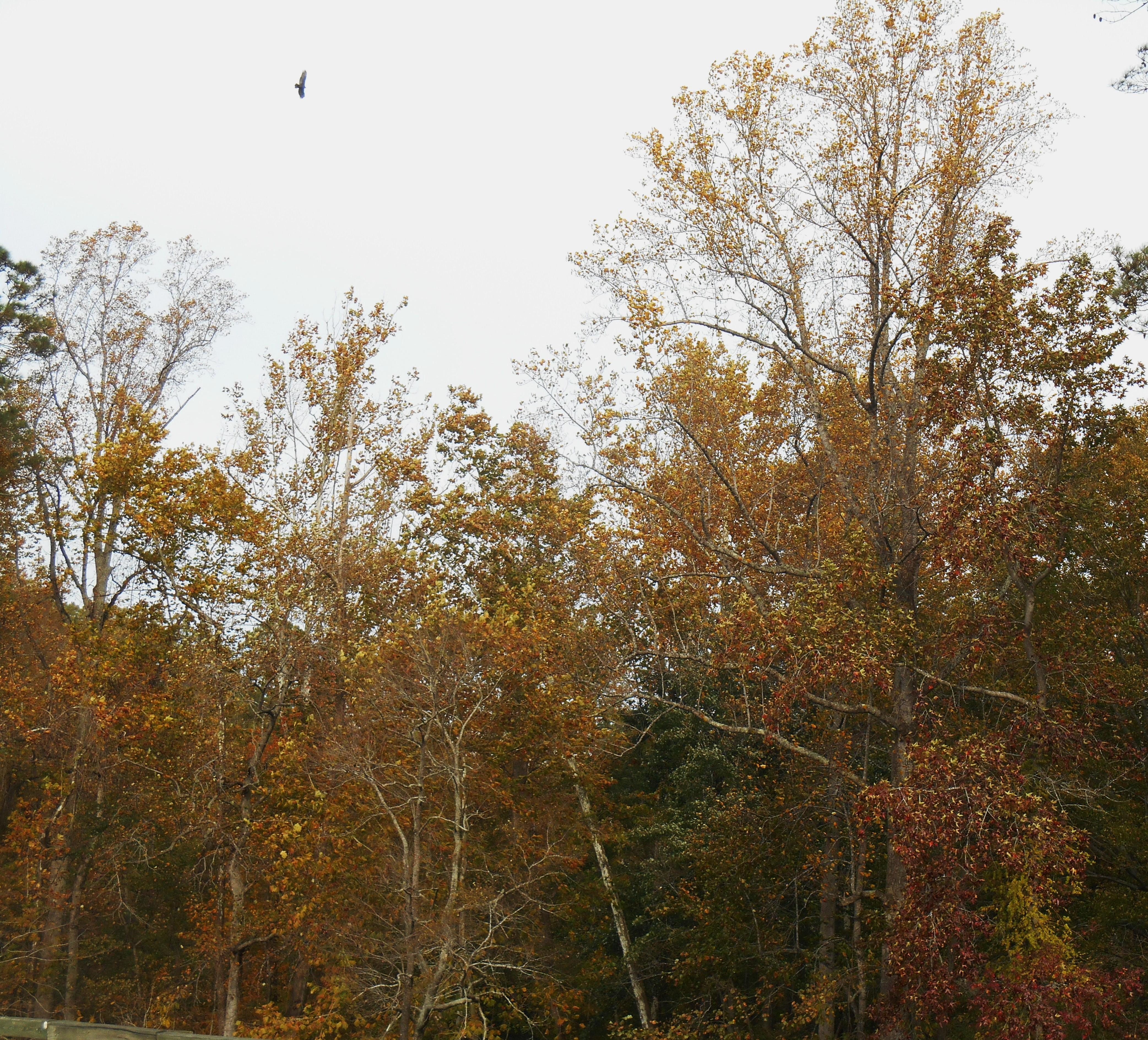 October 29, 2014 fall color 036