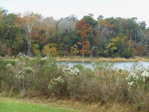 October 29, 2014 fall color 051