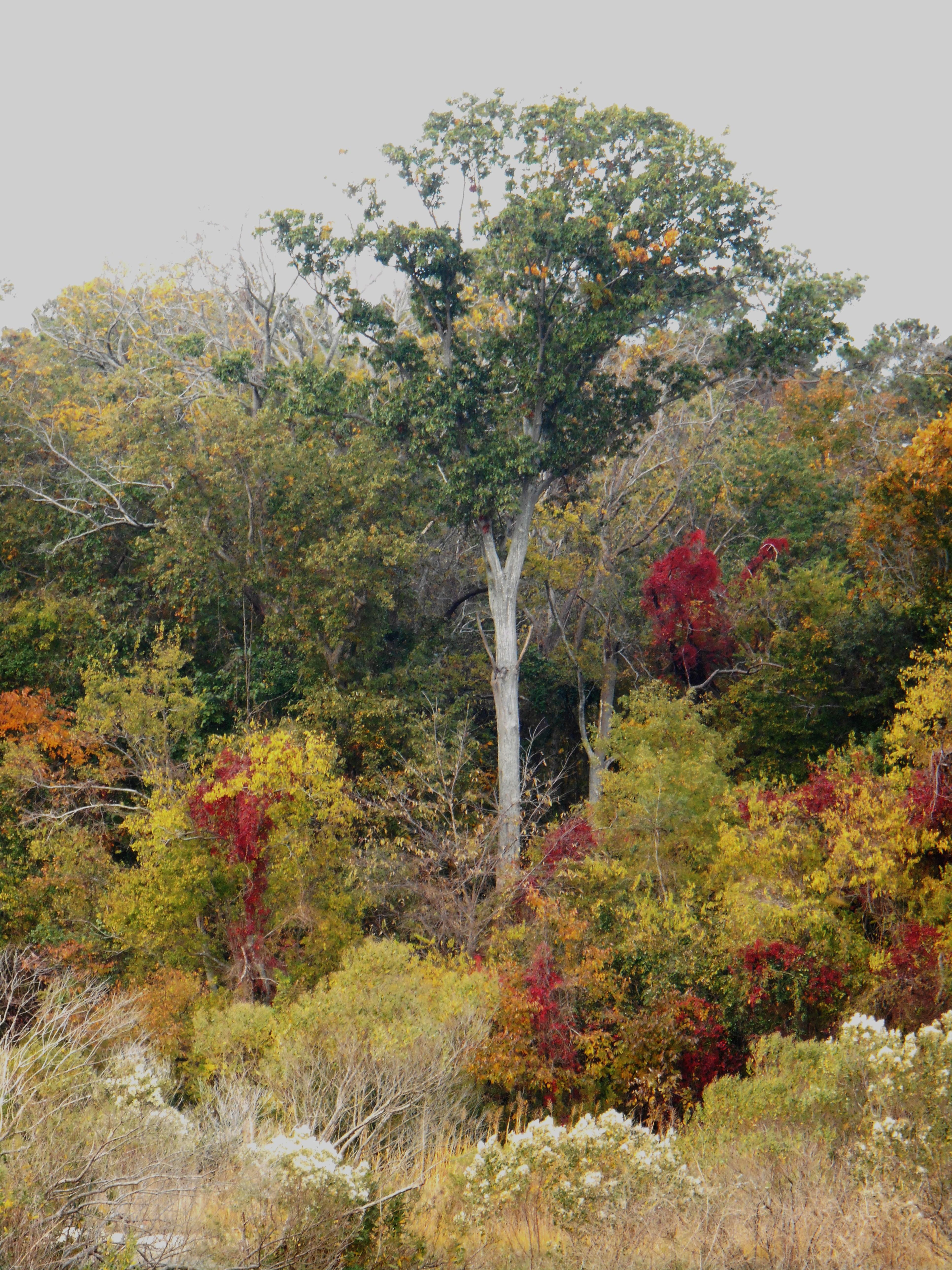 October 29, 2014 fall color 056