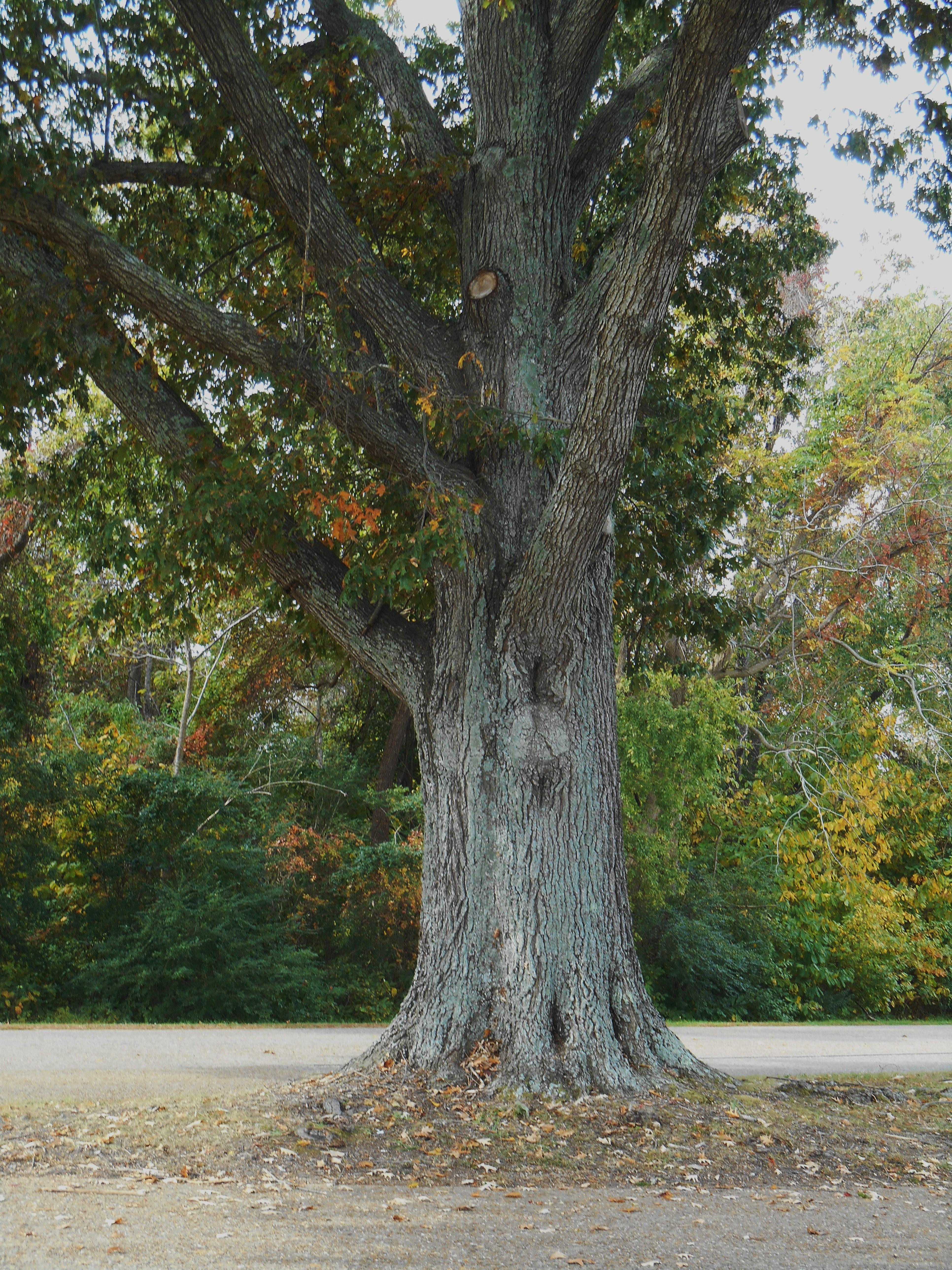 October 29, 2014 fall color 067