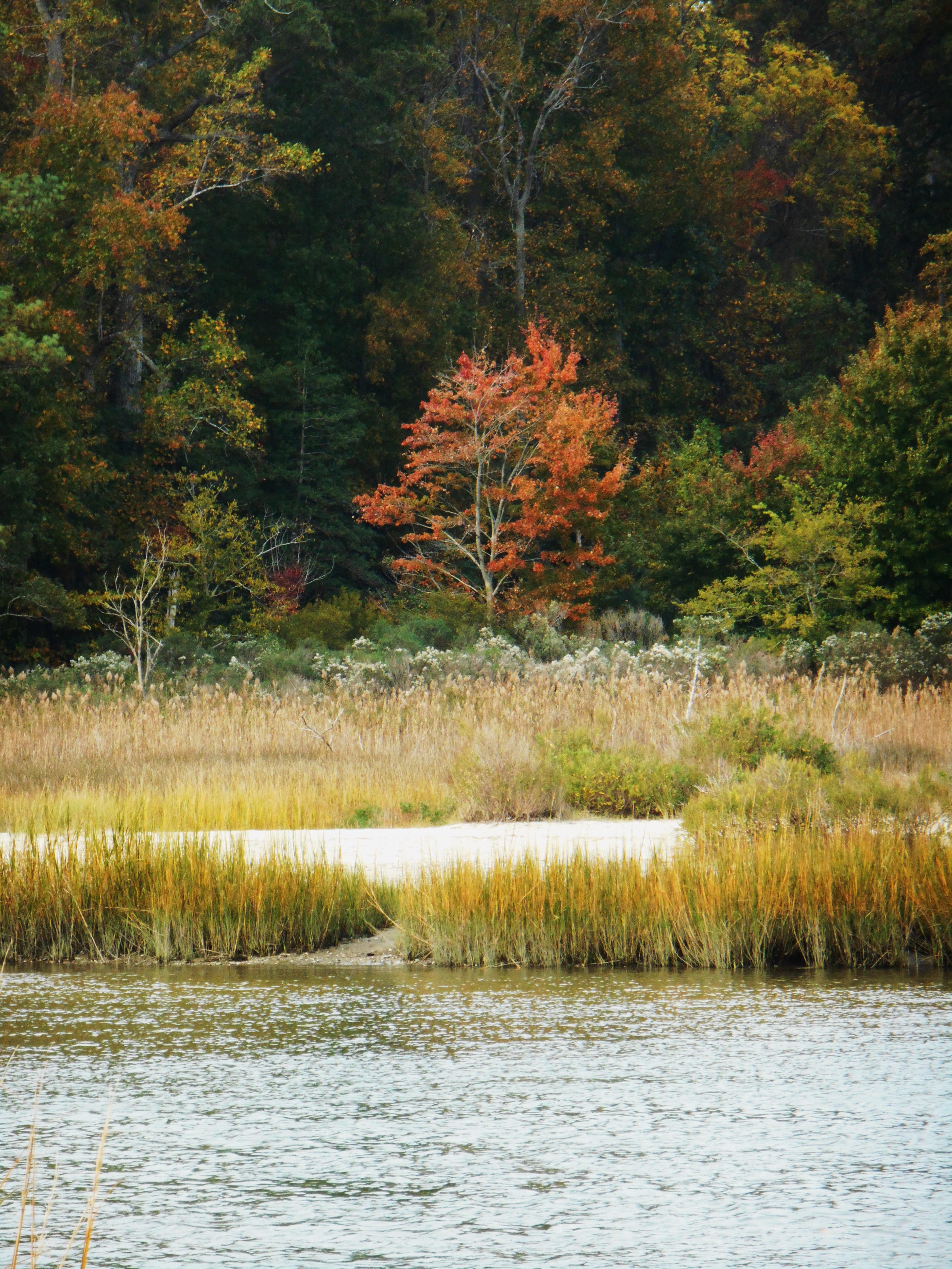 October 29, 2014 fall color 078