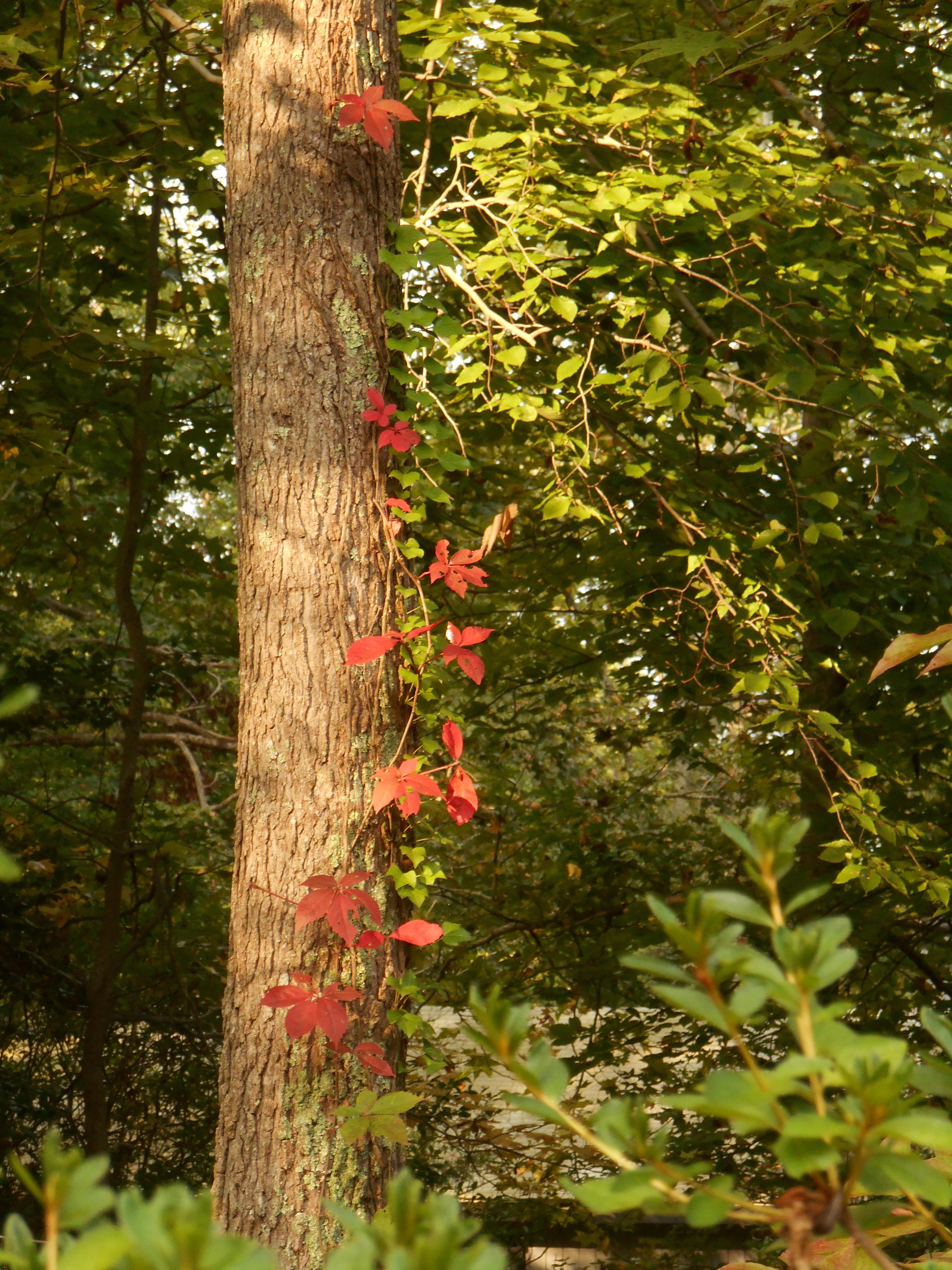 Yggdrasil | Forest Garden