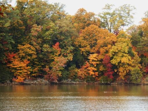 October 31, 2014 color 010
