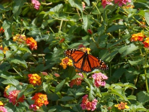 October 7, 2014 garden 006
